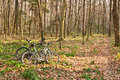 Two bikes in the spring forest Royalty Free Stock Photography
