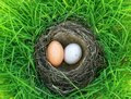 Two bird eggs of different colors lie in the nest on the lush gr Royalty Free Stock Photo