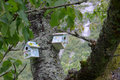 Two birdhouses hanging in tree Royalty Free Stock Images
