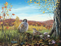 Two birds in the autumn woods illustration of hazel grouses Stock Images