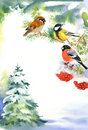 Two birds and bullfinch on the snowy branch with berries of viburnum christmas tree in snow background Royalty Free Stock Photo