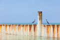 Two birds sitting on a metal wave breaker Royalty Free Stock Photo
