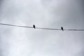 Two birds on a wire Royalty Free Stock Photo