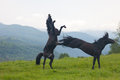 Two black stallions on a pasture Stock Photography