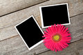 Two blank photo frames and fresh pink flower Royalty Free Stock Photo