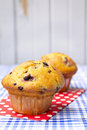Two blueberry muffins Royalty Free Stock Image