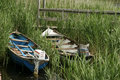 Two boats in reeds small with outboard engines are pulled ashore at the edge of a lake the skiffs are surrounded by marsh grass Stock Photo
