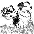 Two Border Collie Dogs in Flower Field Royalty Free Stock Photo