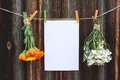 Two bouquets of camomile and calendula and sheet of paper on clothespegs on old wooden background Royalty Free Stock Photo