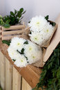 Two bouquets of white chrysanthemums Royalty Free Stock Photo