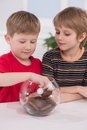 Two boys taling cookies from jar friens sitting at table on white background Stock Photos