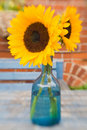 Two bright beautiful sunflowers Royalty Free Stock Photo
