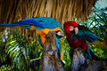 Two bright parrot macaw preen their feathers Stock Images