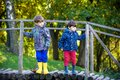 Two brothers sibling boy child crossing little wooden bridge in Royalty Free Stock Photo