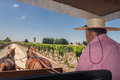 Two brown horses carrying charriot vineyard colchagua valley chile sand road mountains horizon Royalty Free Stock Images