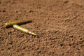 Two bullets, machine gun bullets on soil Royalty Free Stock Photo