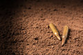 Two bullets, machine gun bullets on soil Royalty Free Stock Photo