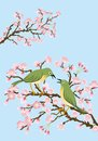 Two bush warblers on branche cherry branches Stock Photos