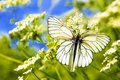 Two butterfly sitting on top of each other on the plant in summer warm weather Stock Image