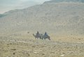 Two camel riders egypt men riding on camels in the desert Royalty Free Stock Image