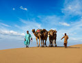 Two cameleers camel drivers with camels in dunes of thar deser rajasthan travel background indian desert jaisalmer rajasthan india Stock Photos