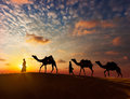 Two cameleers (camel drivers) with camels in dunes of Thar deser Royalty Free Stock Photo
