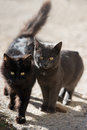Two cats black and gray looking at camera Royalty Free Stock Photo