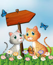 Two cats in front of an empty wooden arrow board Royalty Free Stock Photo