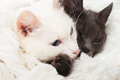 Two cats lying on a white veil Royalty Free Stock Images