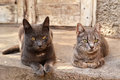 Two cats near an abandoned house the cat and the cat Royalty Free Stock Image