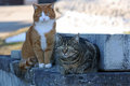 Two cats observe curiously the surroundings Stock Photo