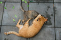 Two cats playing Royalty Free Stock Photo