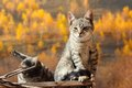 Two cats relaxing over golden autumn forest background Stock Images