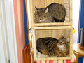 Two cats are sitting in a basket Stock Photos