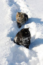 Two cats in the snow Stock Photography