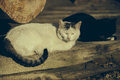 Two cats on the wooden floor Royalty Free Stock Photo