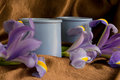 Two ceramic pots with irises Royalty Free Stock Photo