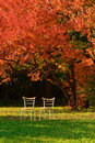 Two chairs and red maple Stock Images
