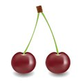 Two cherry colorful illustration with for your design Stock Photo