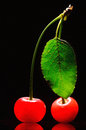 Two cherry isolated on black background Royalty Free Stock Images