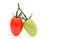 Two cherry tomatoes branch of the on a white background Royalty Free Stock Images