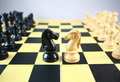 Two chess horse Royalty Free Stock Photo