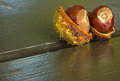 Two Chestnuts With Shell On A ...