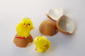 Two chickens with eggshells traditional easter scene yellow and Stock Image