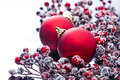 Two Christmas baubles and holly berries Royalty Free Stock Image