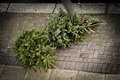 Two Christmas trees on the pavement Royalty Free Stock Photo