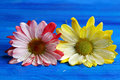 Two Chrysanthemums Royalty Free Stock Photo