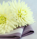 Two chrysanthemums on napkin. Royalty Free Stock Photo