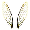 Two cicada wings