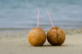 Two coconuts on sandy sea shore of tropical island Royalty Free Stock Image
